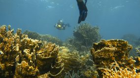 School  of fish near corals. A shot of small fish near the corals stock footage