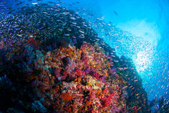 School of Fish over Coral Reef. Royalty Free Stock Photos