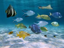 School of fish over a sandy ocean floor. School of fish with ripples of sunlight reflected on the sandy ocean floor in shallow water Royalty Free Stock Photo