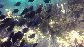 School of fish. On the reef in the ocean stock footage
