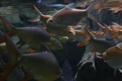 School of fish. In river Stock Photos