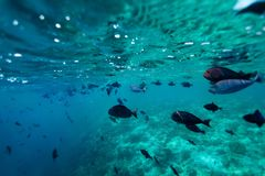 School of fish - shoot from bellow Stock Photography