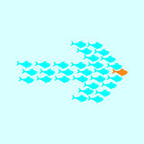 School of fish swimming in shape of arrow. School of cute celadon fish swimming in shape of arrow behind its gold fish leader. Concept of success and business Royalty Free Stock Photo