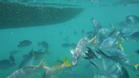 A school of fish swimming under a boat. A close up shot of a school of fish swimming close to a motored boat. The water of the ocean are crystal blue and was stock video
