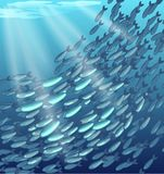 a school of fish Royalty Free Stock Images