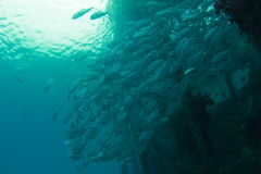 School of fish under the jetty Stock Images