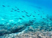 Underwater view of fish shoal stock photo