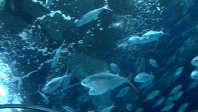 School of fish in underwater aquarium, low angle. Shoot stock footage