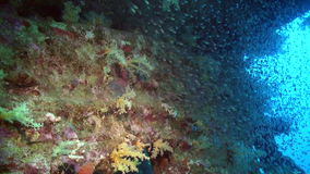 School of fish underwater on background of colorful corals in Red sea. stock footage