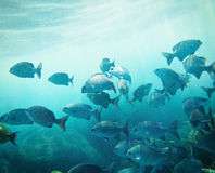 School of fish Royalty Free Stock Image