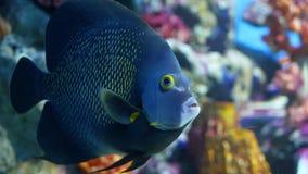 School of fish of various species swimming in clean blue water of large aquarium. Marine underwater tropical life. School of fish of various species swimming in stock footage