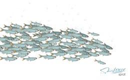 plenty more silverfish in the sea
