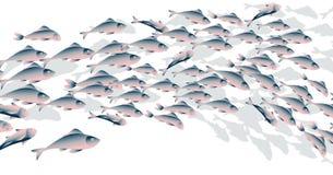 School of fish vector illustration for header, Stock Photos