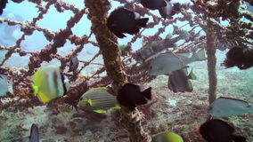 School of fish on wreck on the sea sandy bottom. Zoom in to wreck on the sea sandy bottom. Amazing, beautiful underwater world Bali Indonesia and  life of its stock footage