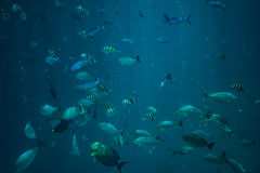 School of fishes underwater Stock Photo