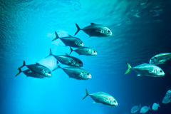 School of fishes Stock Photo