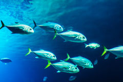 School of fishes Stock Image