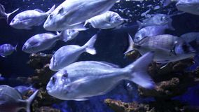School of fishes underwater stock video footage