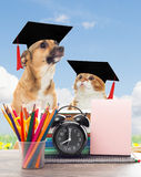 School  and funny pets Stock Photo