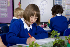 School girl writing in notebook with plant seedlings on desk Stock Photos