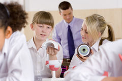 School girls working with biology model in classroom Royalty Free Stock Image
