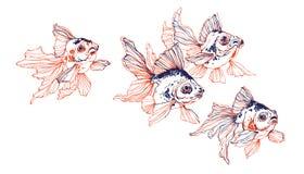 School of golden fish on white background stock illustration