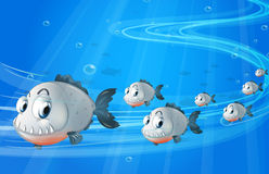 A school of gray fishes Royalty Free Stock Image