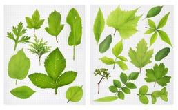 School herbarium Stock Image
