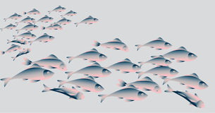 School of herring fish on white background. Royalty Free Stock Photography