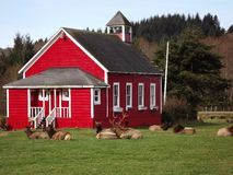 School house. One room school house with elk hanging out Royalty Free Stock Photos