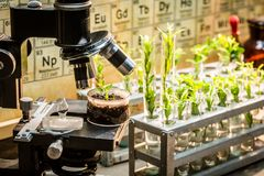 School laboratory with microscope and green plants. Closeup of school laboratory with microscope and green plants royalty free stock photography