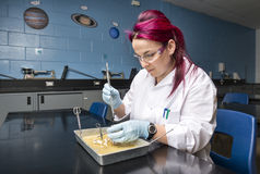 School laboratory Royalty Free Stock Photography