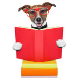 School learing dog Stock Photo