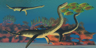 Undersea Plesiosaurus Royalty Free Stock Photo