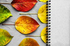 School notebook and autumn leaves. Back to school concept. Creative flat lay. School notebook and autumn color leaves. Back to school concept. Creative flat lay royalty free stock images