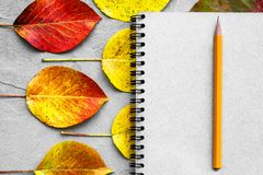 School notebook, pencil and autumn leaves. Back to school concept. Creative flat lay. School notebook, pencil and autumn color leaves. Back to school concept stock photography