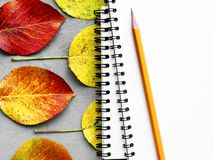 School notebooks, pencil and autumn leaves. Back to school concept. Creative flat lay. School white notebooks on the springs stacked, pencil and autumn color royalty free stock photography