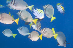 Free School Of Fish Royalty Free Stock Images - 22370789