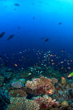 School Of Fish Over Coral Reef Stock Photography