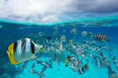 Free School Of Tropical Fish Underwater Sky With Cloud Stock Photos - 133656563
