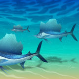 School of sailfish. Floating above seabed Stock Photo