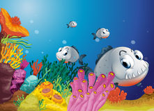 A school of scary gray fishes Stock Photography
