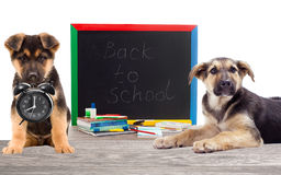 School set and canine Stock Photos