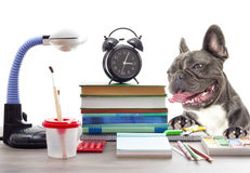 School set and French bulldog Stock Image