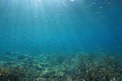 School of small fish underwater Mediterranean sea. A school of small fish underwater in the Mediterranean sea, natural light, Spain, Costa Brava Stock Image