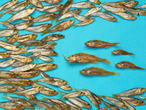 A school of smoked fish on blue paper Royalty Free Stock Images