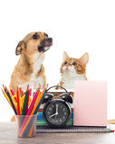 School supplies and pets Royalty Free Stock Photos
