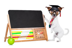 School teacher dog Royalty Free Stock Image
