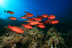 School of Tropical Fish Stock Photos
