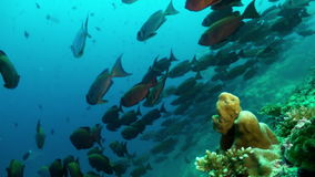 School of tropical fish on reef in search of food. stock video